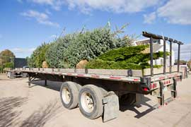 With our direct ship program we can expand our offerings of evergreens, including spruce and arborvitae
