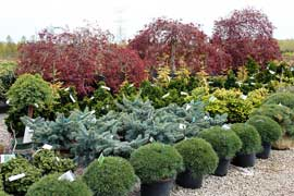 We can source specialty evergreens